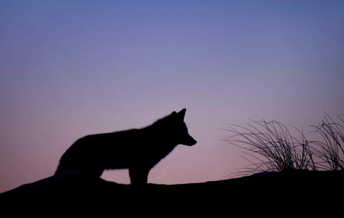 A loner 一匹オオカミ 英語