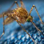 蚊に刺される【毎日ネイティブ英語フレーズ集♡例文と発音 188】