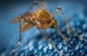 蚊に刺される【毎日ネイティブ英語フレーズ集♡例文と発音 188】get bitten by mosquitos
